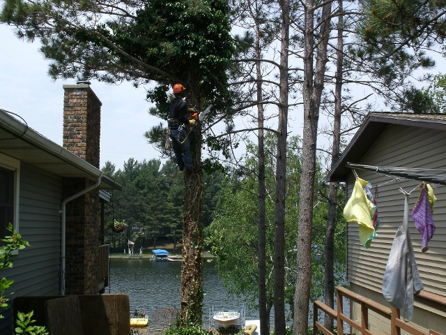 Tree Climbing and Trimming