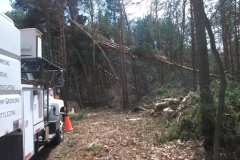 Land & Property Clearing